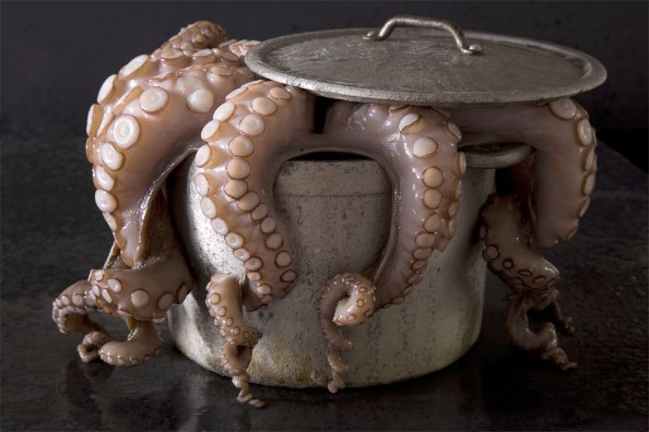 Oktopus, © Uta Rauser