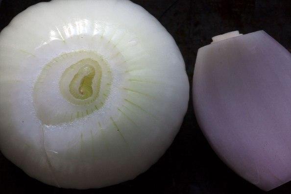 Zwiebel und Schalotte