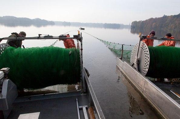 Zugnetzfischerei am Eutiner See